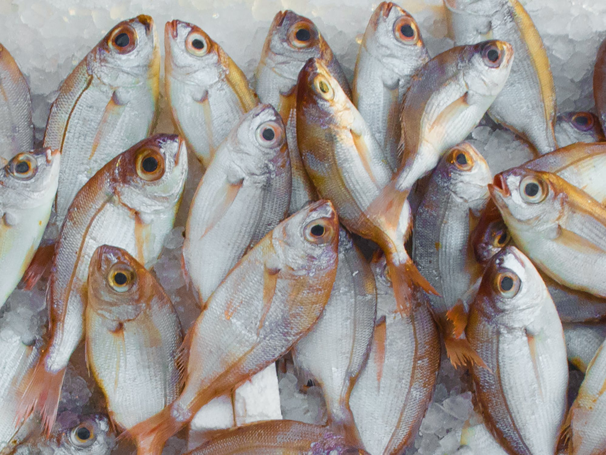 Well Established Seafood Market For Sale | Rare Opportunity