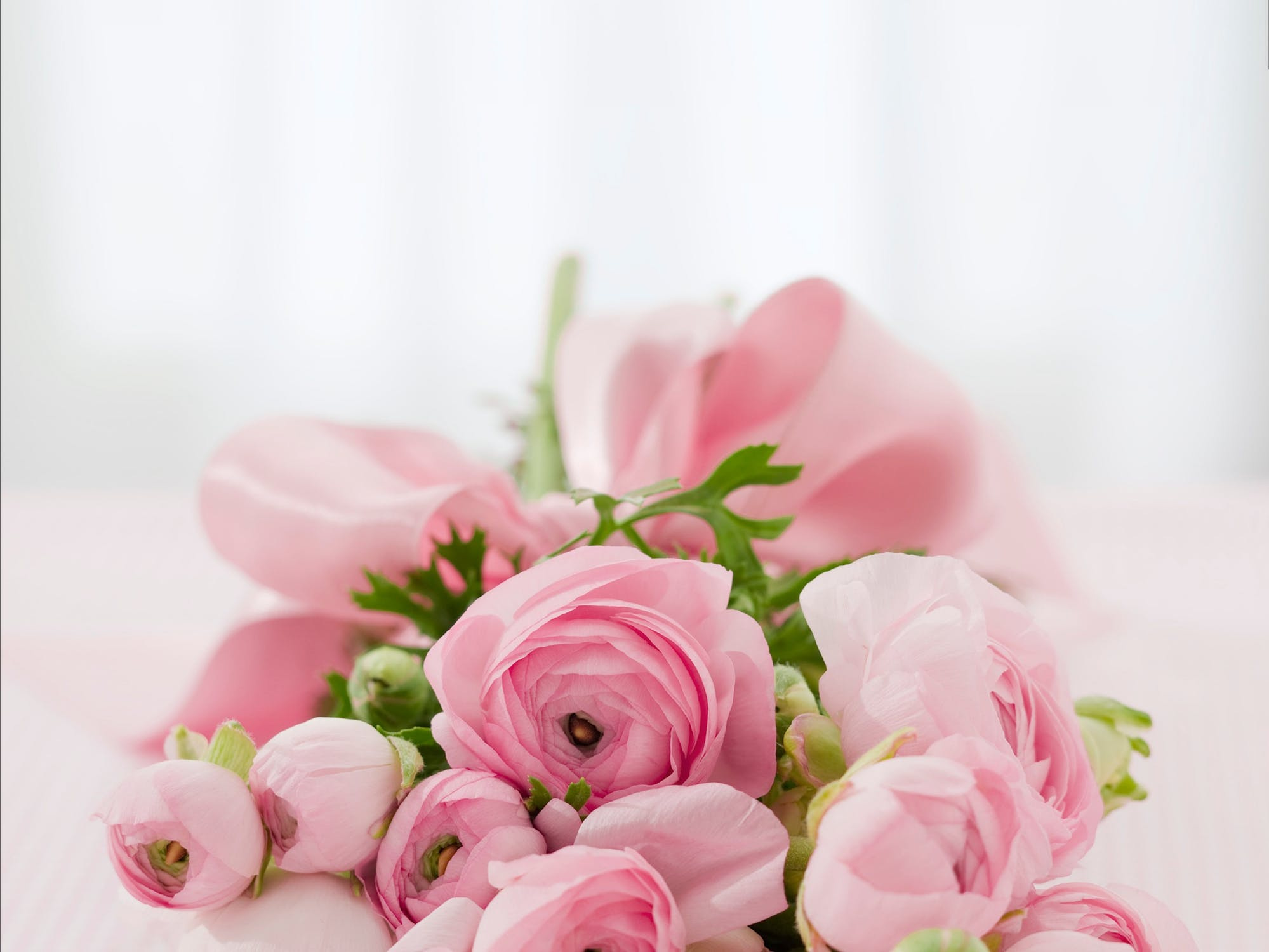 Florist Business For Sale | Brisbane